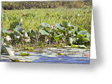 Kakadu Life Greeting Card