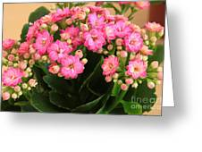 Kalanchoe. Greeting Card by Alexandr  Malyshev