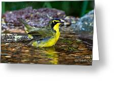 Kentucky Warbler Greeting Card