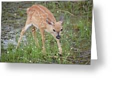 Key Deer Fawn Greeting Card