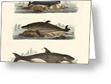 Kinds Of Whales Greeting Card