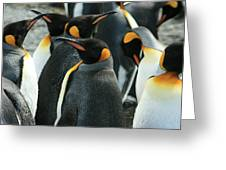 King Penguin Colony Greeting Card