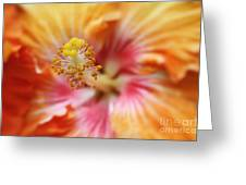 Ko Aloha Makamae E Ipo Aloalo Exotic Tropical Hibiscus Maui Hawaii Greeting Card