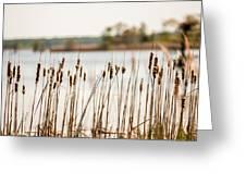 Lake Mattamuskeet Nature Trees And Lants In Spring Time  Greeting Card