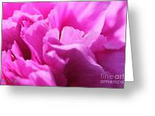 Lavender Carnation Greeting Card