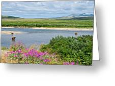 2-lay Of The Land-grizzly Bears In Moraine River In Katmai Np-ak Greeting Card