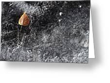 Leaf On Ice Greeting Card