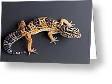 Leopard Gecko Eublepharis Macularius Greeting Card