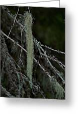 Lichen Greeting Card
