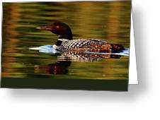 Loon 6 Greeting Card