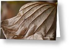 Lotus Leaf Greeting Card