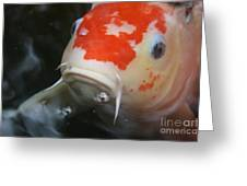 Lucky Koi 1 Greeting Card