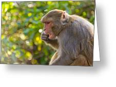 Macaque Eating An Orange Greeting Card