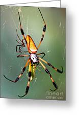 Male And Female Silk Spiders With Prey Greeting Card