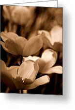 Many Tulips Greeting Card