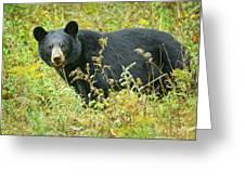Meadow Black Bear Greeting Card