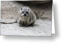 Rock Hyrax Headshot Greeting Card