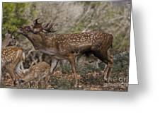 Mesopotamian Fallow Deer 3 Greeting Card