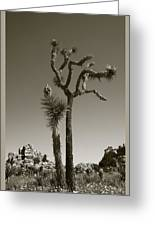 Joshua Tree National Park Landscape No 2 In Sepia Greeting Card