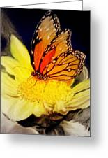 Monarch Resting Sold Pastel Greeting Card