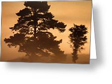 Moorland In The Morning Mist Netherlands Greeting Card