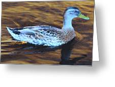 Mottled Duck Greeting Card