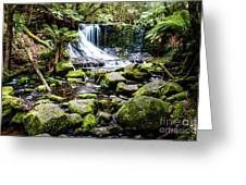 Mt Field National Park Greeting Card
