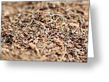 Mulch Greeting Card