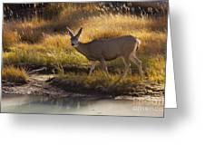 Mule Deer   #3950 Greeting Card