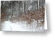 Nature In Winter Under Snow In Denmark Greeting Card