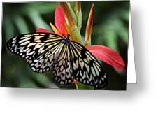 Nature's Treasures  Greeting Card