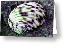Nerita Versicolor Four-tooth Nerite Shell Greeting Card