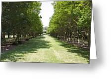 Norfolk Botanical Garden 2 Greeting Card