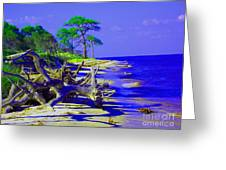 North Florida Beach Greeting Card by Annette Allman