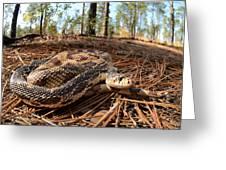 Northern Pine Snake Greeting Card