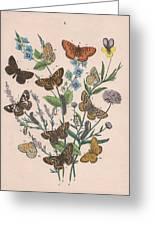 Nymphalidae Greeting Card