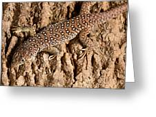 Ocellated Lizard Timon Lepidus Greeting Card