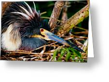 On The Nest Greeting Card