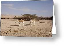 Onager Equus Hemionus Greeting Card