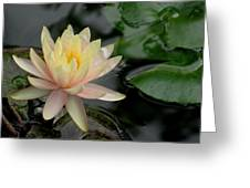 Once A Pond A Water Lily Greeting Card