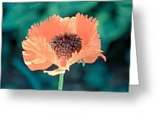 Orange Poppy Greeting Card