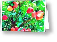 Orange Trees With Fruits On Plantation Greeting Card