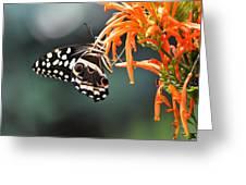Orchard Swallowtail Greeting Card