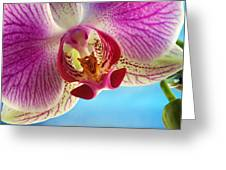 Pink Orchid Flower Details Greeting Card