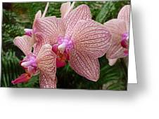 Orchid No.7 Greeting Card by Gregory Young