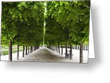 Palais Royal Trees Greeting Card