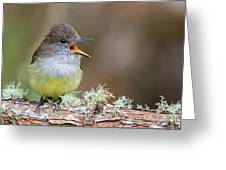 Pale-edged Flycatcher Greeting Card