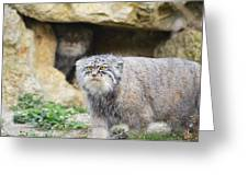 Pallas Cat Greeting Card