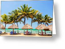 Palm Trees And Sea Greeting Card