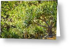 Pandanus Palm Tree Greeting Card